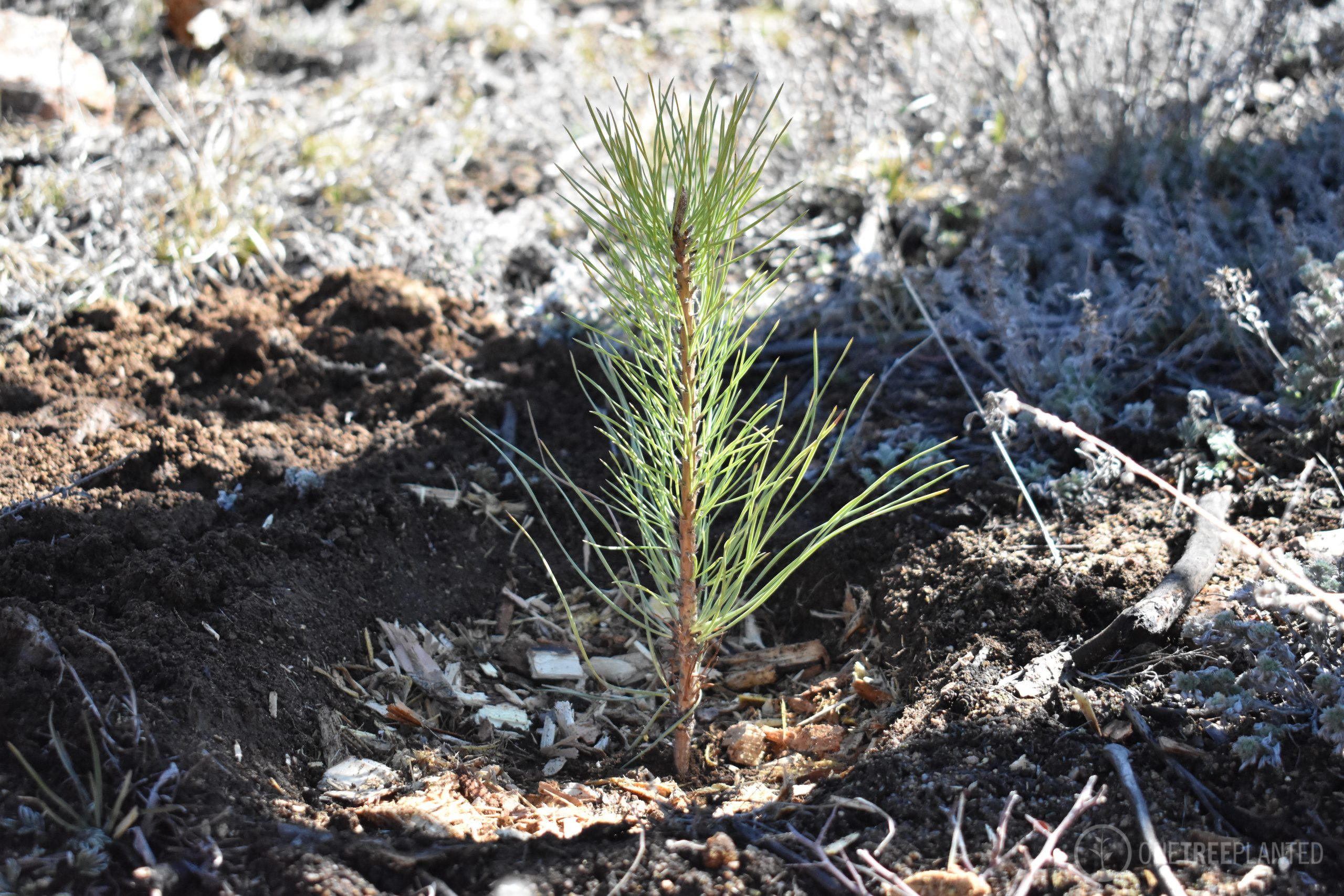 One-Tree-Planted